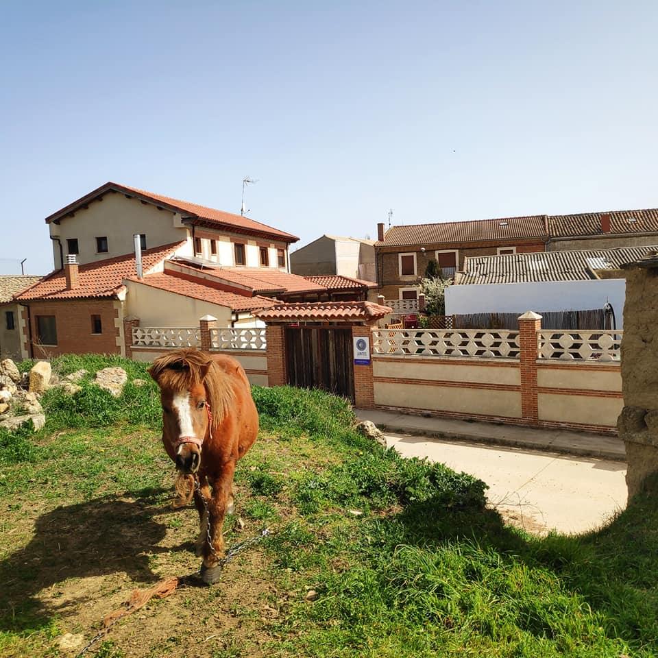 tuin en paard-garden and horse-jardin y caballo